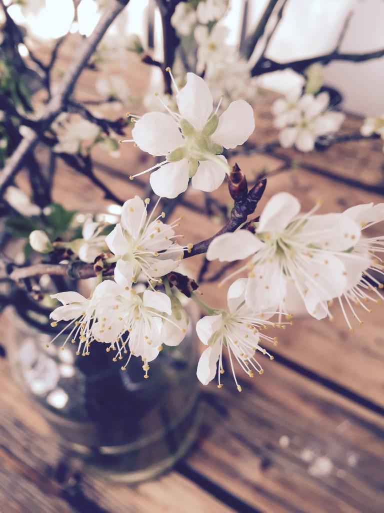 blüten white blossom anjiko
