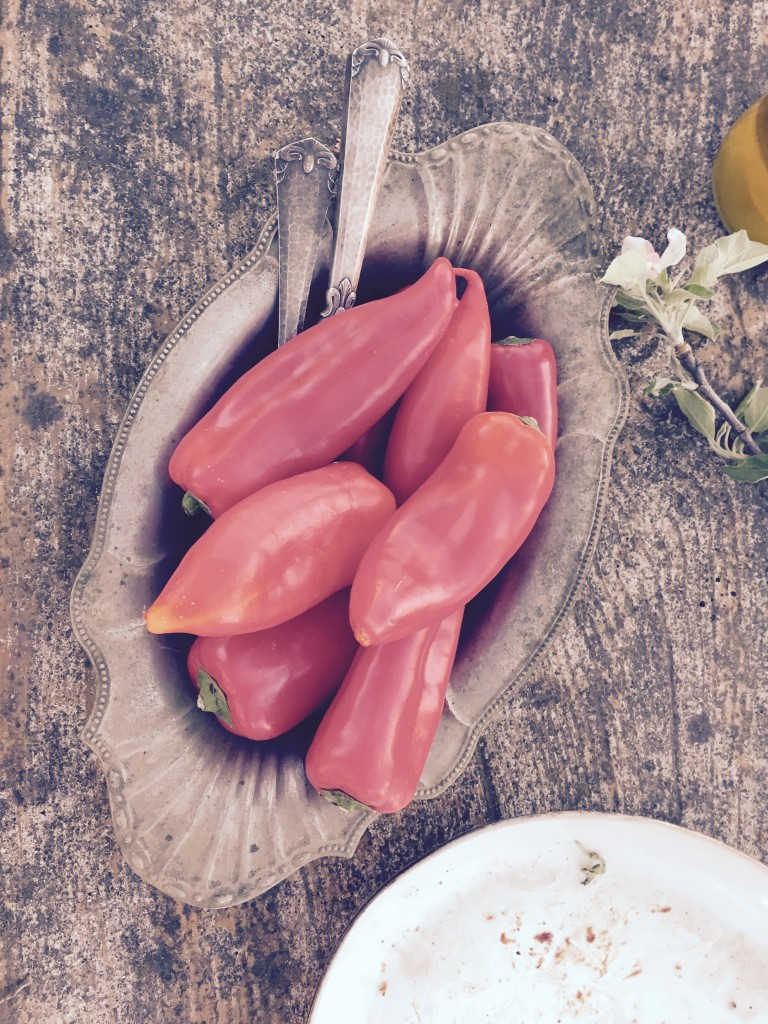 Paprika Grillen anjiko