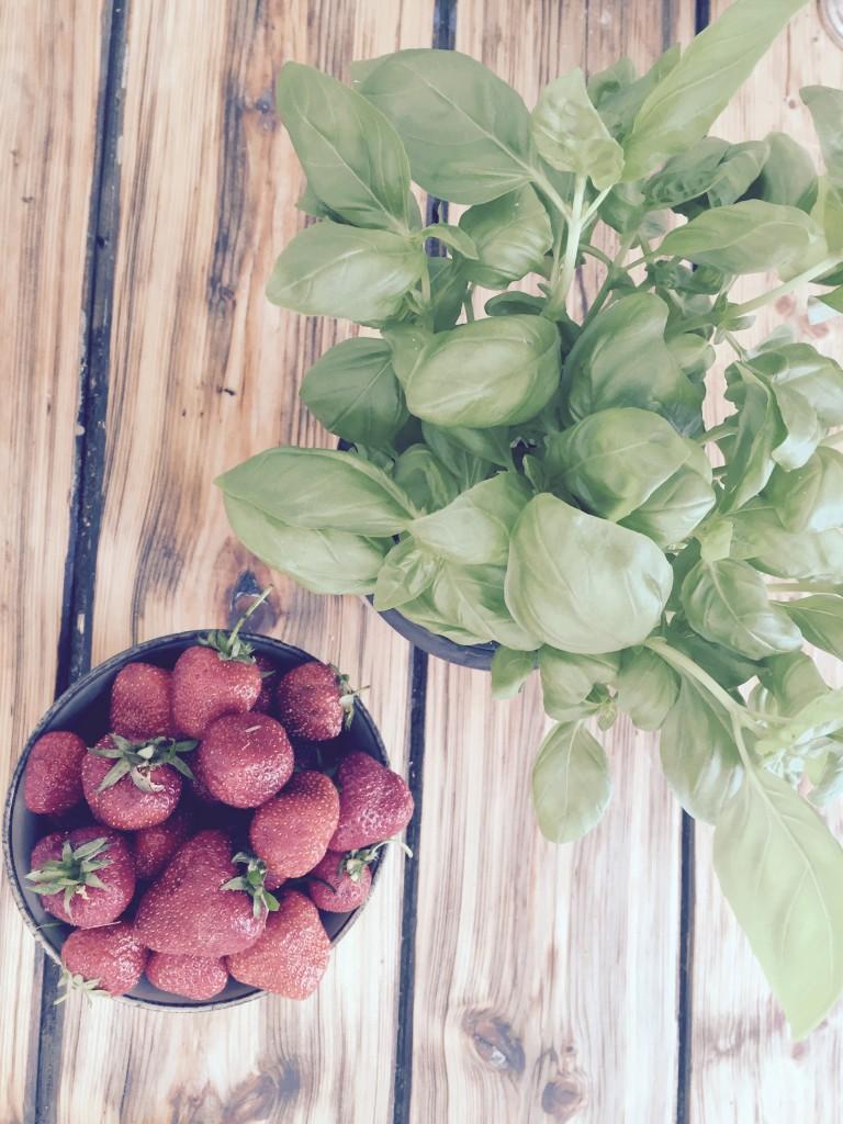 Basilikum und Erdbeeren anjiko