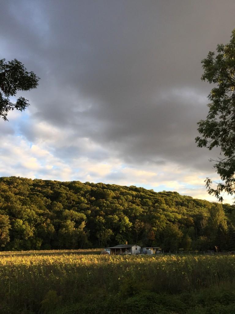 Herbstwald anja krause anjiko blog
