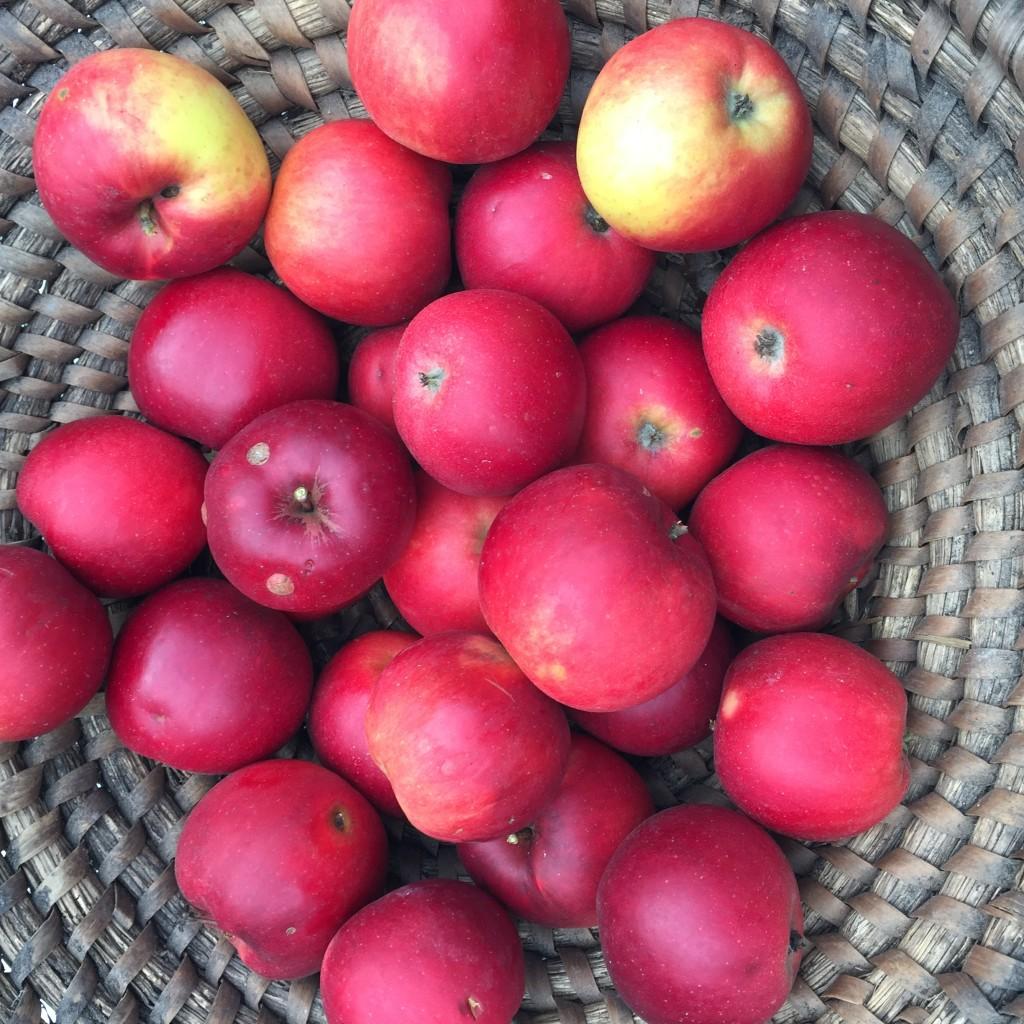 Äpfel apple blog anjiko Anja Krause Apfelgelee