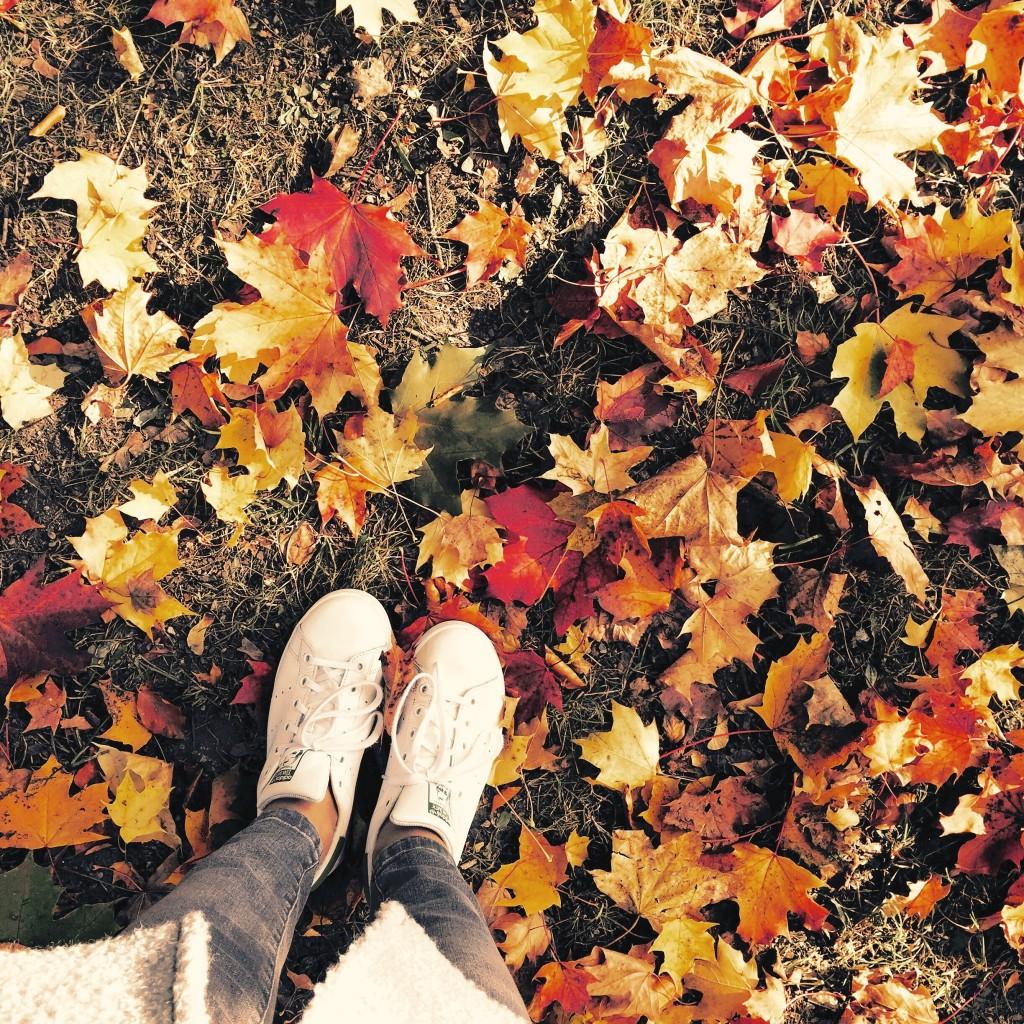 Wunderschöner Herbst. Autumn. blog.anjiko.com Anja Krause